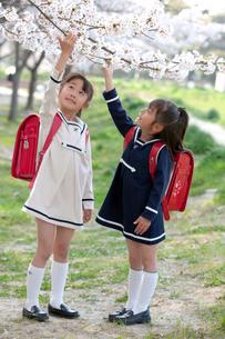 桜の花と小学生の写真素材 [FYI04052296]