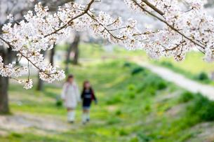桜の花と小学生の写真素材 [FYI04052298]