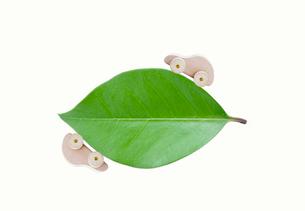 葉っぱと木の車の写真素材 [FYI04052325]