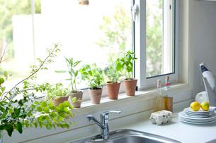 キッチン窓辺のハーブと果物の写真素材 [FYI04052355]