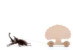 木を引っ張るカブトムシの写真素材 [FYI04052571]