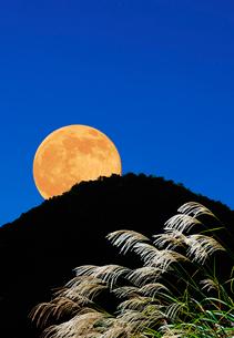 すすきと満月の写真素材 [FYI04052603]