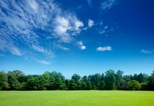広がる芝生の向うに森とスジ雲の写真素材 [FYI04052732]