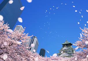 桜散る大阪城とビジネスパークビル群の写真素材 [FYI04052736]