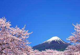 桜と青空に富士山の写真素材 [FYI04052742]