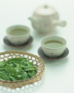 茶葉と急須と湯のみの写真素材 [FYI04052856]