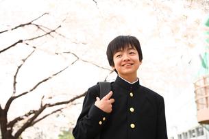 桜と男子中学生の写真素材 [FYI04053503]
