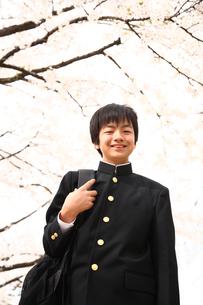 桜と男子中学生の写真素材 [FYI04053512]