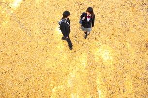 イチョウの絨毯の上の高校生カップルの写真素材 [FYI04053530]