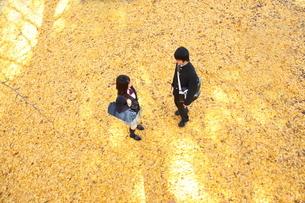 イチョウの絨毯の上の高校生カップルの写真素材 [FYI04053531]