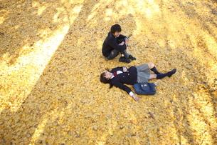 イチョウの絨毯の上の高校生カップルの写真素材 [FYI04053534]