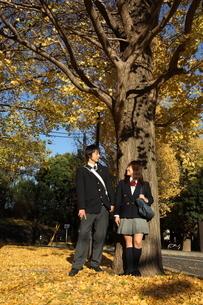 イチョウの木の下の高校生カップルの写真素材 [FYI04053538]