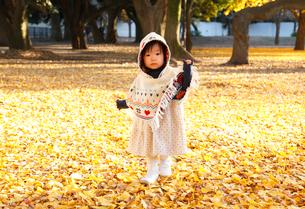 銀杏のじゅうたんで遊ぶ女の子の写真素材 [FYI04053546]