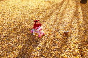 銀杏のじゅうたんで遊ぶ女の子の写真素材 [FYI04053548]