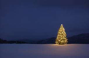 雪原の中のクリスマスツリーの写真素材 [FYI04054762]