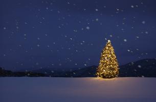 雪原の中のクリスマスツリーの写真素材 [FYI04054767]