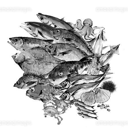 いろいろな魚介セット 水彩 水墨画風 モノトーンのイラスト素材 [FYI04055027]