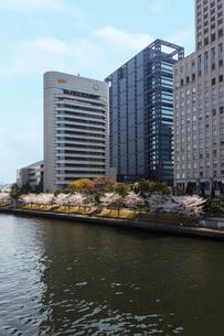 大阪ビジネスパークと桜並木の写真素材 [FYI04055140]
