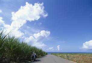 海へ続く道とさとうきび畑の写真素材 [FYI04058283]
