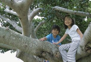 木登りをする男の子と女の子の写真素材 [FYI04058380]