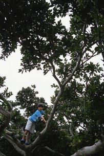 木登りをする男の子の写真素材 [FYI04058381]