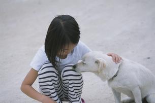 犬をなでる女の子の写真素材 [FYI04058384]