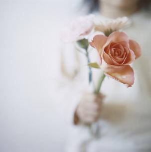 3輪の花を握る女の子の手の写真素材 [FYI04058451]