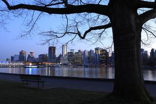 スタンレーパークより望むウォータフロントのビル群の夕暮れの写真素材 [FYI04059602]