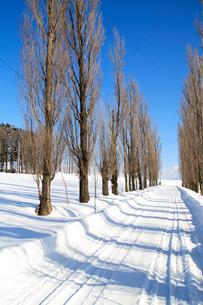 雪のポプラ並木道の写真素材 [FYI04060677]