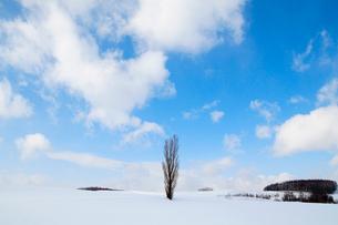 雪原とポプラの里仁の写真素材 [FYI04060689]