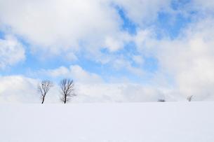 雪の丘に並ぶ2本の木,パフィの木の留辺蘂の写真素材 [FYI04060690]