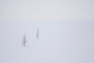 雪の丘に立つ2本の木の写真素材 [FYI04060693]