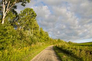 夕暮れの畑と散策路と雲,小道の写真素材 [FYI04060732]
