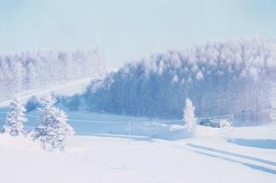 雪原と雪の積もった林の写真素材 [FYI04060768]