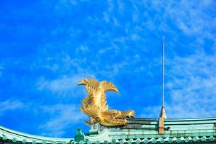 名古屋城・金鯱の写真素材 [FYI04060880]