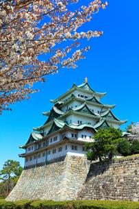 春の名古屋城 天守閣と快晴の空に桜の写真素材 [FYI04060882]