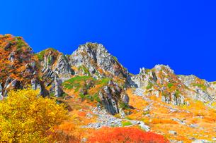 秋の中央アルプス千畳敷カール 紅葉と快晴の空の写真素材 [FYI04060884]