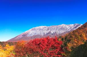 秋の大山・冠雪に紅葉と快晴の空の写真素材 [FYI04060885]