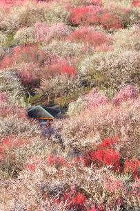 いなべ市農業公園 花咲く梅林公園の写真素材 [FYI04060894]