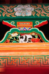 日光東照宮 眠り猫 廻廊の写真素材 [FYI04060933]