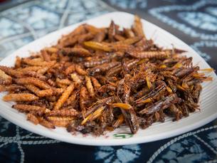 中国 雲南省 虫料理の写真素材 [FYI04060953]