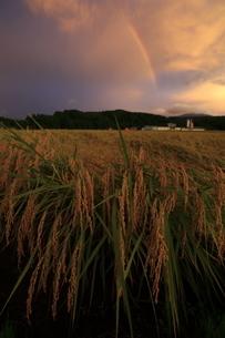 新潟の稲穂と虹の写真素材 [FYI04060992]