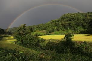 新潟の田園と虹の写真素材 [FYI04060994]