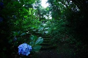 苔寺 妙法寺の写真素材 [FYI04061032]