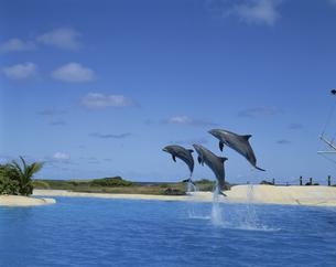ジャンプするイルカの写真素材 [FYI04061299]