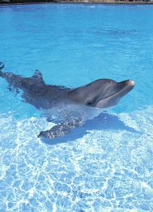 イルカの写真素材 [FYI04061301]