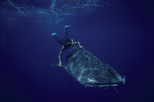サメとダイバーの写真素材 [FYI04061304]