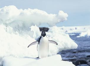 氷の上のペンギンの写真素材 [FYI04061323]