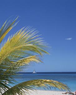 ビーチのヤシの葉の写真素材 [FYI04061373]