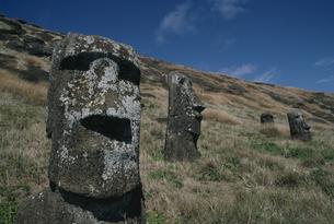モアイ像 イースター島の写真素材 [FYI04061378]